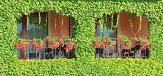 Những khung cửa sổ đẹp hút hồn nhờ sắc hoa rực rỡ - Ảnh 20.