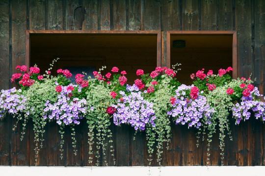 Những khung cửa sổ đẹp hút hồn nhờ sắc hoa rực rỡ - Ảnh 3.
