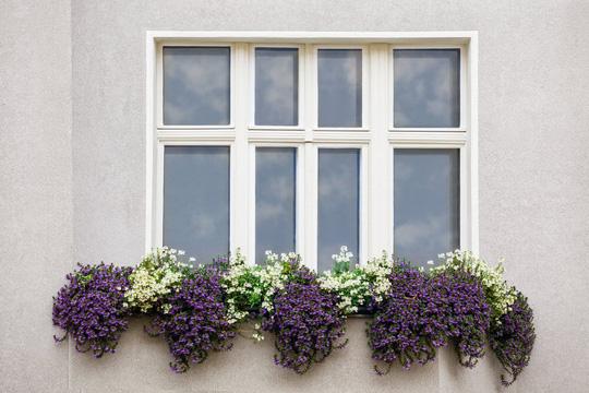 Những khung cửa sổ đẹp hút hồn nhờ sắc hoa rực rỡ - Ảnh 6.