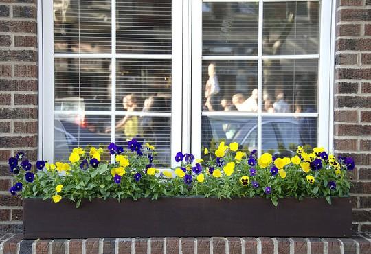 Những khung cửa sổ đẹp hút hồn nhờ sắc hoa rực rỡ - Ảnh 9.