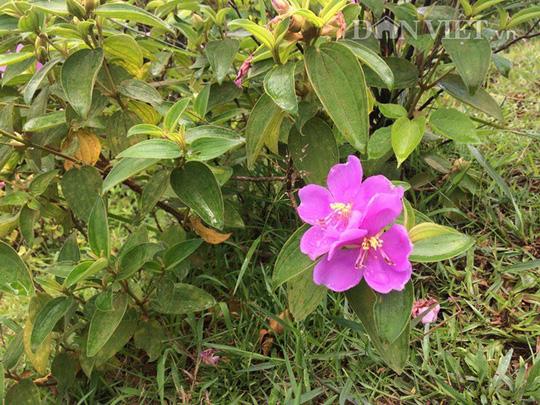 Khám phá vẻ đẹp hoang sơ trên đảo tiền tiêu Vĩnh Thực - Ảnh 5.