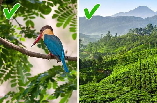 12 lý do khiến bạn hối tiếc khi chưa đến thăm Ấn Độ - Ảnh 3.