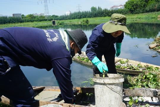 Đà Nẵng: Hàng tấn cá rô phi chết trắng tại mặt hồ điều tiết - Ảnh 4.