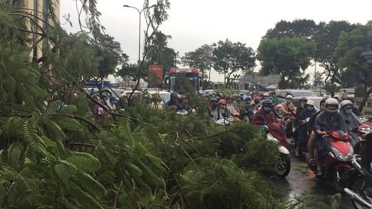 Gió quật ngã cây xanh ở Công trường Mê Linh, đè bị thương 2 người - Ảnh 2.