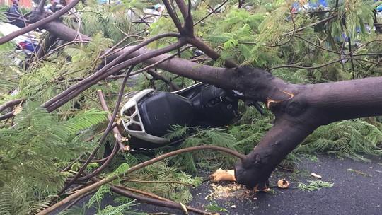 Gió quật ngã cây xanh ở Công trường Mê Linh, đè bị thương 2 người - Ảnh 1.