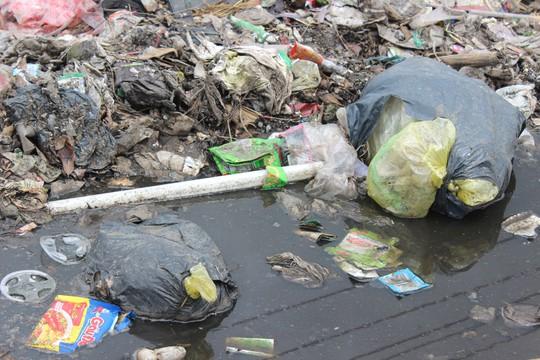 Ớn với cảnh rác tấn công ở Bà Rịa - Vũng Tàu - Ảnh 3.