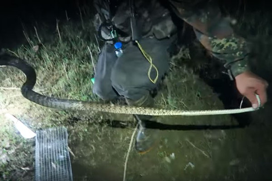 Lạnh người với cảnh săn rắn giữa đêm nước nổi - Ảnh 2.