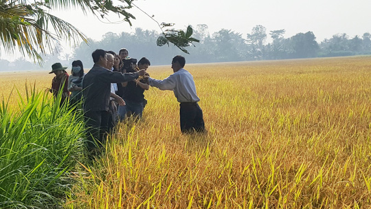 Nông dân lãi hơn 50 triệu đồng/ha nhờ trồng lúa sạch - Ảnh 1.