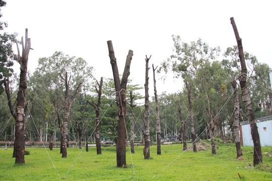 Cây xanh chết khô ở Công viên Gia Định - Ảnh 1.