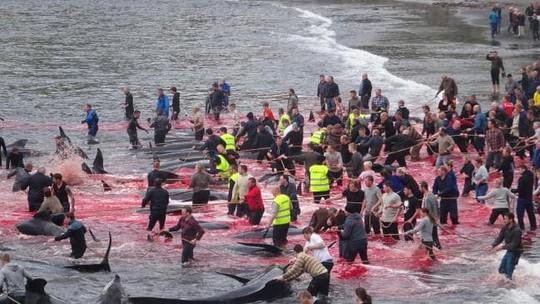 Hãi hùng cảnh tàn sát cá voi, nước biển chuyển màu máu - Ảnh 4.