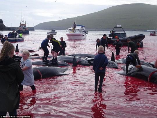 Hãi hùng cảnh tàn sát cá voi, nước biển chuyển màu máu - Ảnh 6.