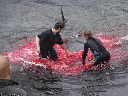 Hãi hùng cảnh tàn sát cá voi, nước biển chuyển màu máu - Ảnh 5.