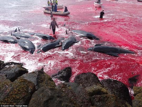 Hãi hùng cảnh tàn sát cá voi, nước biển chuyển màu máu - Ảnh 8.
