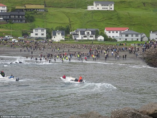 Hãi hùng cảnh tàn sát cá voi, nước biển chuyển màu máu - Ảnh 7.