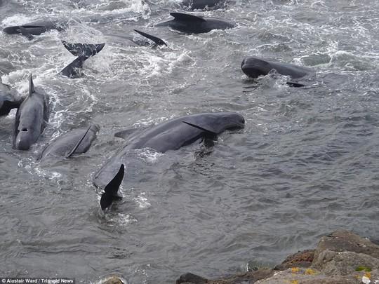 Hãi hùng cảnh tàn sát cá voi, nước biển chuyển màu máu - Ảnh 9.
