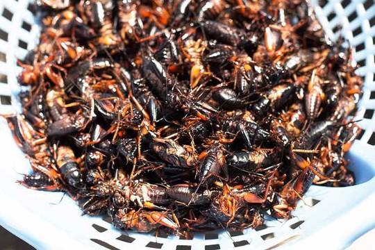 Dế xào sả ớt - món ăn níu chân du khách ở Lâm Đồng - Ảnh 2.