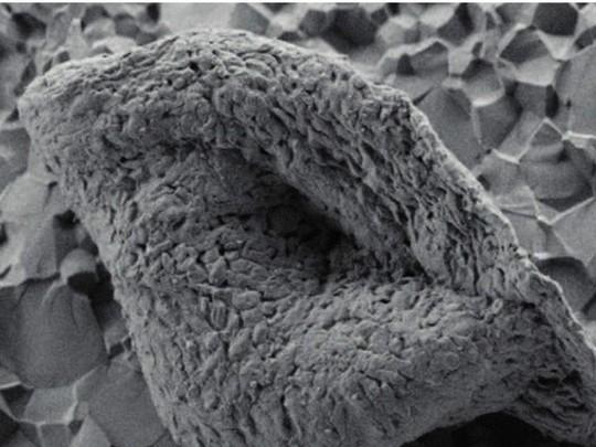 Tìm thấy hóa thạch cổ xưa nhất trái đất - Ảnh 1.