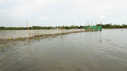 Khai thác nguồn lợi thủy sản mùa nước nổi mang tính tận diệt - Ảnh 1.