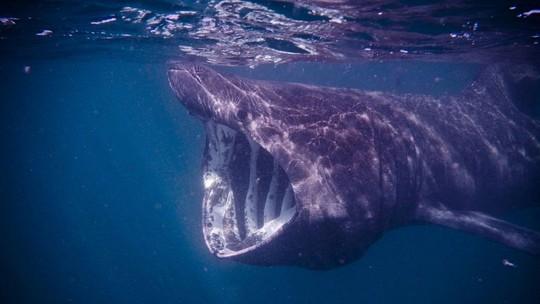 Vệ tinh bám đuôi cá nhám phơi nắng bí ẩn - Ảnh 1.