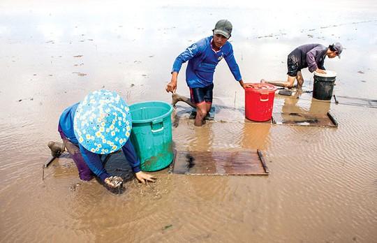Có 1 bãi bồi ở Cà Mau khi nước rút lộ đầy đặc sản biển - Ảnh 1.