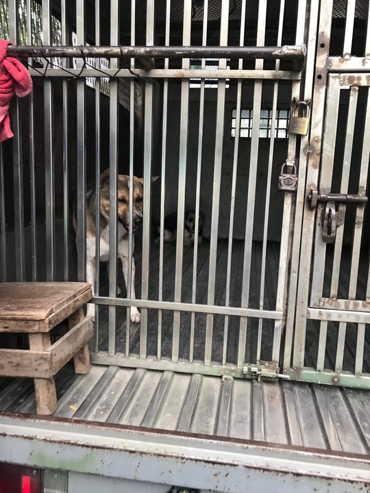 Bắt chó thả rông giữa trung tâm Sài Gòn - Ảnh 2.