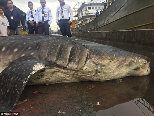 Hãi hùng cảnh lôi xác cá nhám voi ra khỏi vùng nước ngập ngụa rác - Ảnh 4.