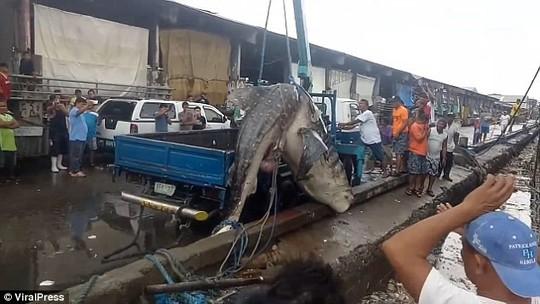 Hãi hùng cảnh lôi xác cá nhám voi ra khỏi vùng nước ngập ngụa rác - Ảnh 2.