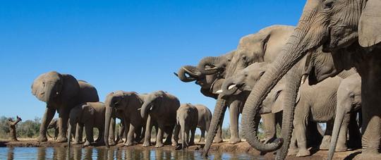 Những thủ phủ voi nức tiếng thế giới - Ảnh 10.