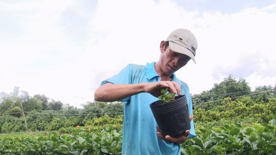 Nông dân Sa Đéc thuần hóa nhiều giống cây kiểng