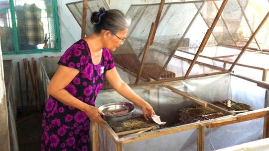 Cô giáo về hưu mỗi tháng cung cấp 500 kg dế ra thị trường - Ảnh 6.