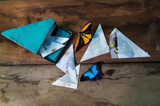Những người săn bướm bí ẩn ở Indonesia - Ảnh 1.