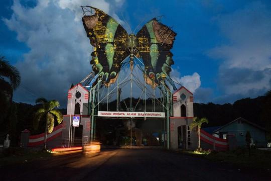 Những người săn bướm bí ẩn ở Indonesia - Ảnh 2.