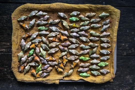 Những người săn bướm bí ẩn ở Indonesia - Ảnh 11.
