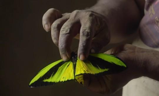Những người săn bướm bí ẩn ở Indonesia - Ảnh 12.