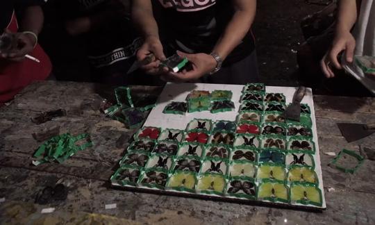Những người săn bướm bí ẩn ở Indonesia - Ảnh 13.