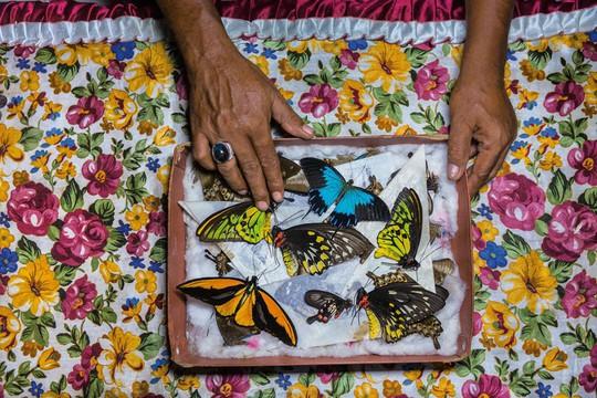 Những người săn bướm bí ẩn ở Indonesia - Ảnh 14.