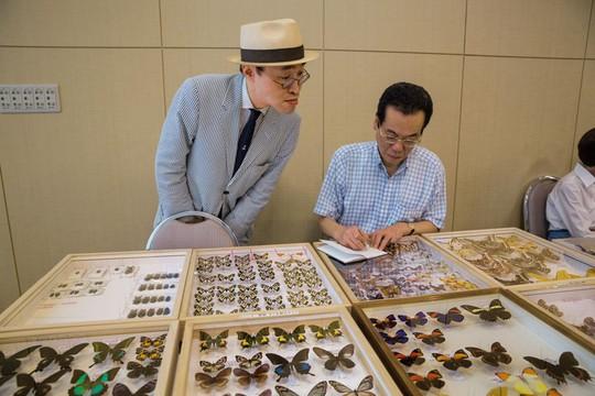 Những người săn bướm bí ẩn ở Indonesia - Ảnh 15.