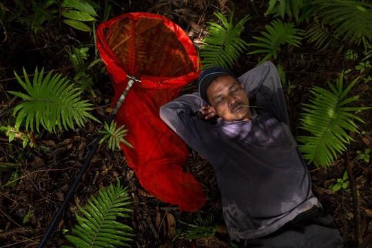 Những người săn bướm bí ẩn ở Indonesia - Ảnh 3.