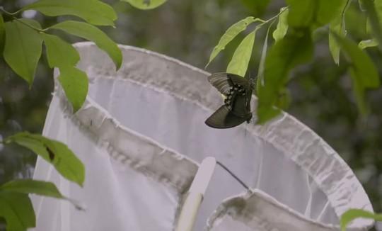 Những người săn bướm bí ẩn ở Indonesia - Ảnh 6.