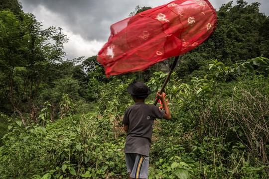Những người săn bướm bí ẩn ở Indonesia - Ảnh 8.