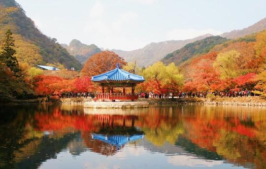 8 trải nghiệm không thể bỏ lỡ khi đến Hàn Quốc mùa thu - Ảnh 1.