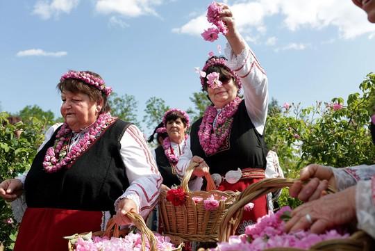 Thung lũng hoa hồng thơ mộng giữa núi đồi Bulgaria - Ảnh 2.