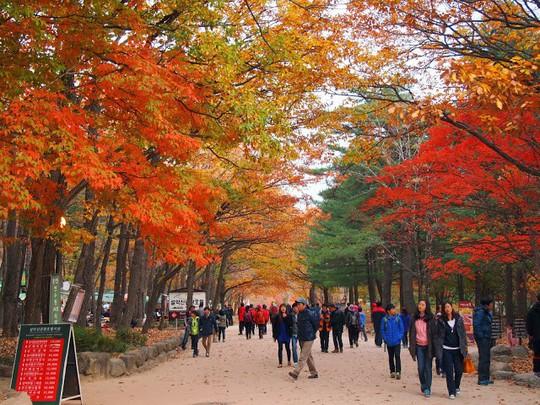 8 trải nghiệm không thể bỏ lỡ khi đến Hàn Quốc mùa thu - Ảnh 4.
