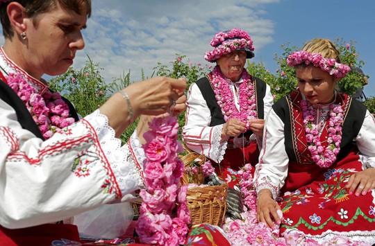 Thung lũng hoa hồng thơ mộng giữa núi đồi Bulgaria - Ảnh 4.