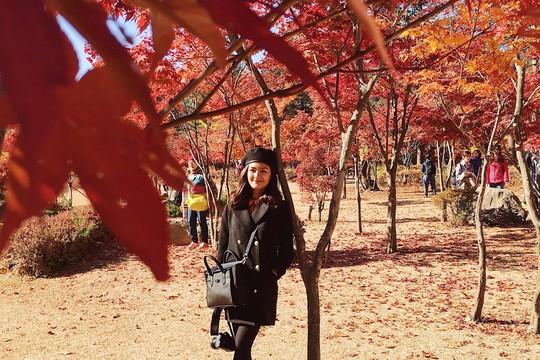 8 trải nghiệm không thể bỏ lỡ khi đến Hàn Quốc mùa thu - Ảnh 5.