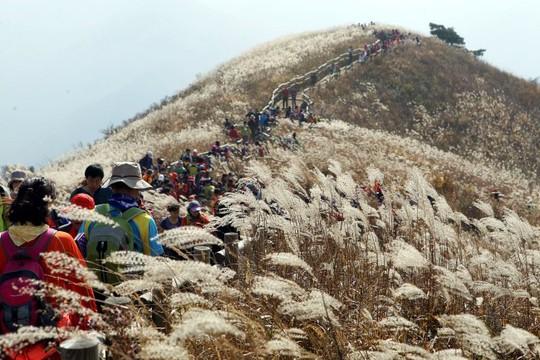 8 trải nghiệm không thể bỏ lỡ khi đến Hàn Quốc mùa thu - Ảnh 7.
