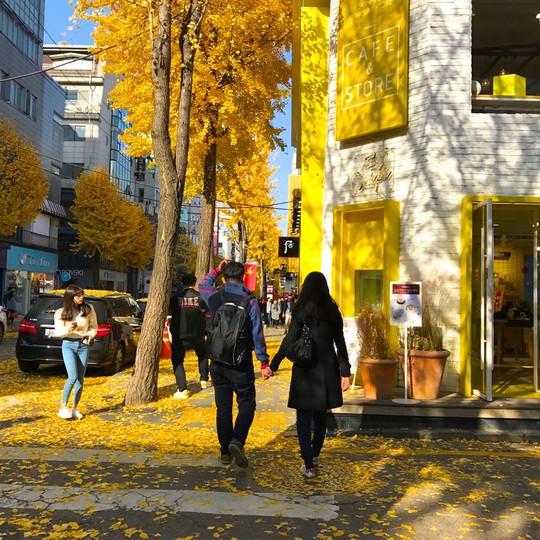 8 trải nghiệm không thể bỏ lỡ khi đến Hàn Quốc mùa thu - Ảnh 8.