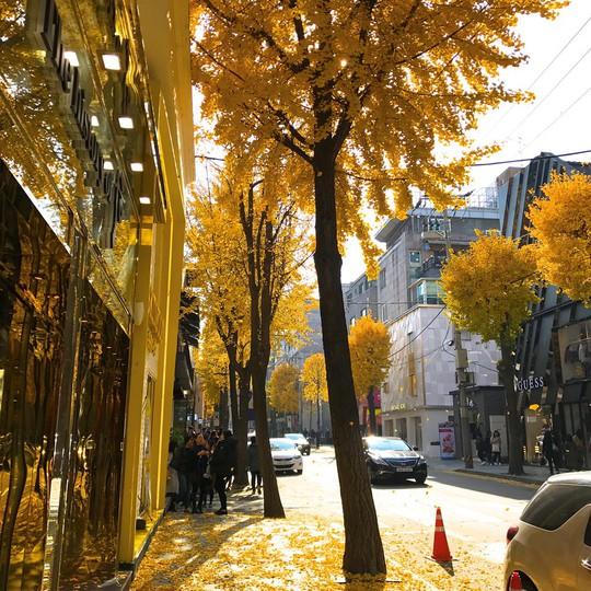 8 trải nghiệm không thể bỏ lỡ khi đến Hàn Quốc mùa thu - Ảnh 9.