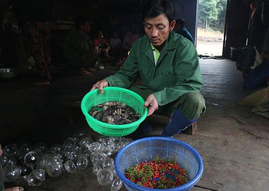 Đặc sản chuột ăn hạt sâm đãi khách quý ở núi Ngọc Linh - Ảnh 2.
