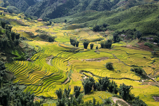 Lúa đã chín vàng khắp thung lũng Mường Hoa, xách ba lô lên và đi thôi! - Ảnh 5.